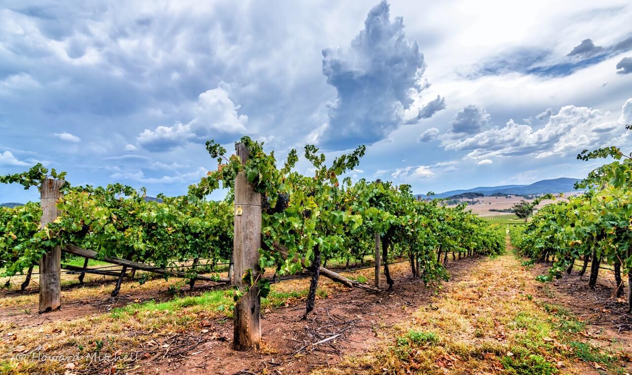 james-estate-wines-vineyard-baerami
