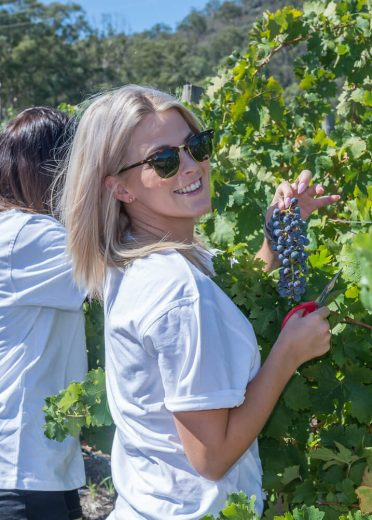 james-estate-wines-hunter-valley-winery-the-experience